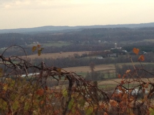 bluemont view