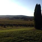 Breaux landscape